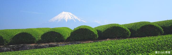 静岡県のイメージ画像